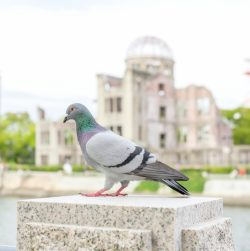原爆の日 広島 原爆ドーム 平和 ハウスクリーニング
