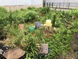 草抜き(手作業) 広島市 空き地の雑草クリーニング
